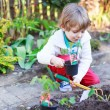 Adorable blond boy planting seeds and seedlings of tomatoes — Stock Photo #70483763