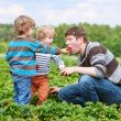 Father and two little boys on organic strawberry farm — Stock Photo #71066359