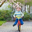 Beautiful toddler child driving his first bike or laufrad — Stock Photo #74094395