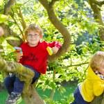 Two active little kid boys enjoying climbing on tree — Stock Photo #75872065