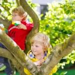 Two active little kid boys enjoying climbing on tree — Stock Photo #75872093