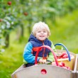 Toddler boy sitting in wooden trolley with red apples — Stock Photo #75872763