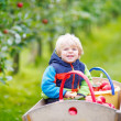 Toddler boy sitting in wooden trolley with red apples — Stock Photo #75872783