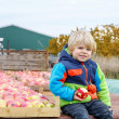 Funny toddler boy sitting on tractor with red apples — Stock Photo #75872791