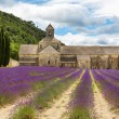 Abbey of Senanque and blooming rows lavender flowers — Stock Photo #77054859