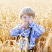 Funny little kid boy in leather shors, walking  through wheat fi — Stock Photo