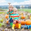 Two little kids boys sitting on big pumpkins on patch — Stock Photo #79437656