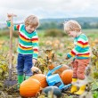 Two little kids boys sitting on big pumpkins on patch — Stock Photo #79437778
