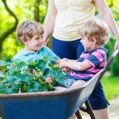 Two little boys having fun in a wheelbarrow pushing by mother — Stock Photo