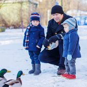Two little cute funny twin boys and their dad feeding ducks — Stock Photo