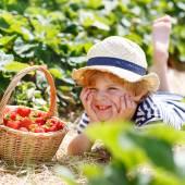 Little kid boy picking strawberries on farm, outdoors. — Stock Photo