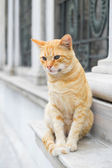 Homeless cat sitting on the stones in Istanbul, Turkey — Stock Photo