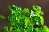 The leaves of fresh parsley — Stock Photo