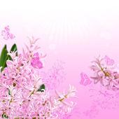 The collage of colors pink hyacinth and butterflies — Stock Photo