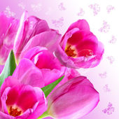 Collage with pink tulips — Stock Photo