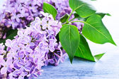 Background with lilac flowers — Stock Photo