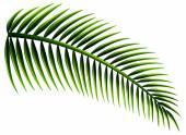 листья пальмы — Cтоковый вектор