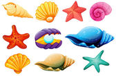 Shell collection — Stock Vector