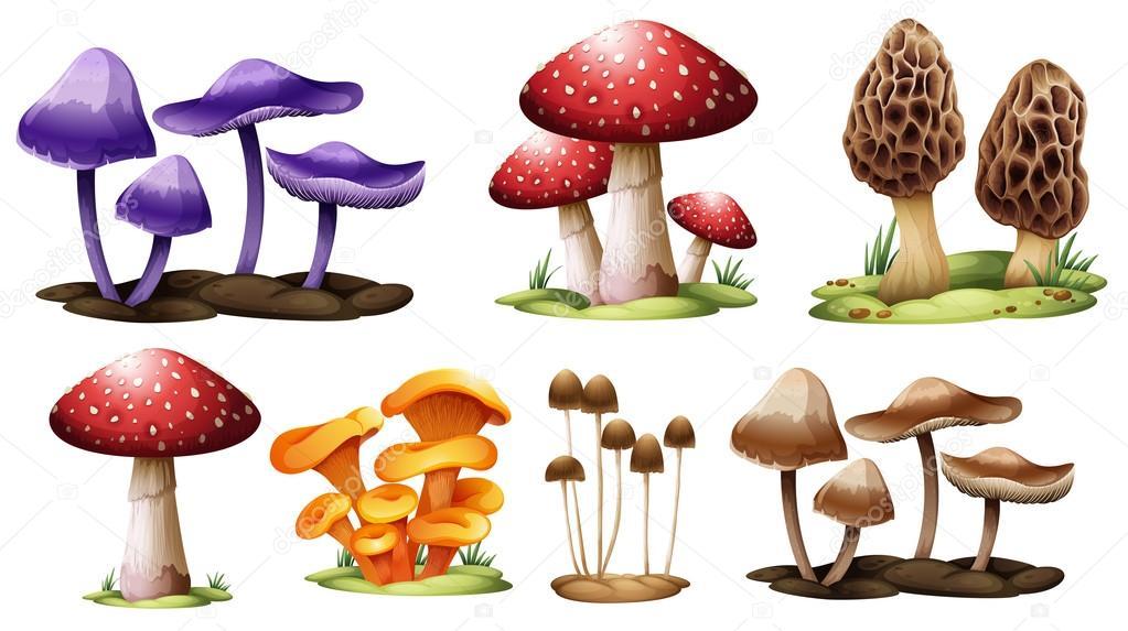 Diversi tipi di funghi vettoriali stock blueringmedia - Diversi tipi di seno ...