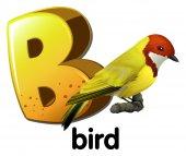 A letter B for bird — Stock Vector