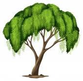 A Californian pepper tree — Stock Vector