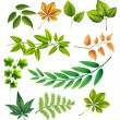 Different leaves — Stock Vector #62766743