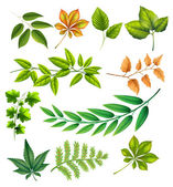 Different leaves — Stock Vector