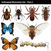 Arthropods — Stock Vector