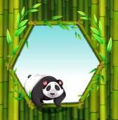 Panda — Stockvector