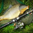 Catching fish. The Common Carp — Stock Photo #65962481