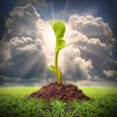 Seedlings growth view — Stock Photo