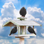Three hungry birds on a wooden bird table — Stock Photo