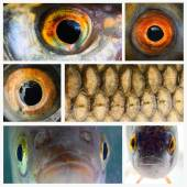 Collage composed of pictures from fish close up — Stock Photo