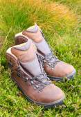 Hiking boots on grass — Stock Photo