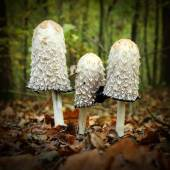 Mysterious mushroom in a forest. — Stock Photo