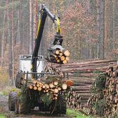 De rooier werken in een forest — Stockfoto