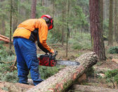 The Lumberjack working in a forest. — Stock Photo