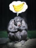 Funny chimpanzee dreaming. — Stock Photo