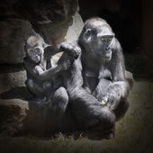 The Gorilla female with her child. — Stock Photo