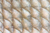 Natural background from fish scales — ストック写真