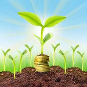 Money growth concept — Stock Photo