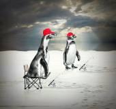 2 つのペンギン フローティングと魚を捕る — ストック写真