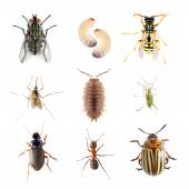 Collection of the insects — Stock Photo