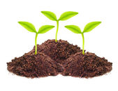 Seedling growing in a soil — Stock Photo