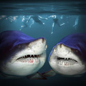 Two sharks have a fun. — Stock Photo