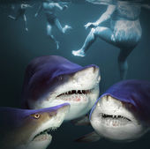 Three sharks have a fun — Stock Photo