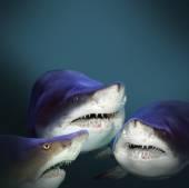 Three sharks have a fun — Stock Photo