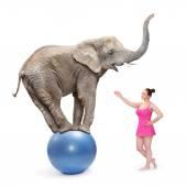 Circus clown girl and elephant — Stock Photo