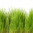 Freshly grown green grass — Stock Photo #52950395
