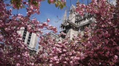 Notre Dame during spring — Stock Video